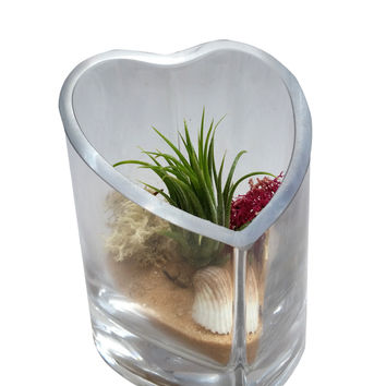 Tan Heart Airplant Terrarium-Mother's Day, Valentine Day, Birthday's