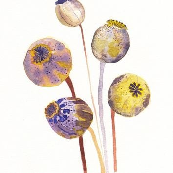 Poppy Pods - Archival Print
