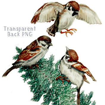 Sparrows Printable   Hand-painted Watercolor Black-Chinned Sparrow - PNG or Book Page Print