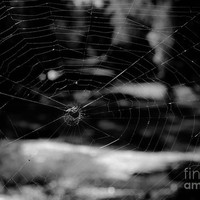 Spider Web Black White by Andrea Anderegg Photography