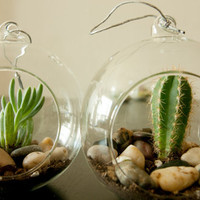 Hanging Terrarium with Cactus or Succulent