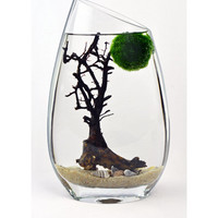 Marimo Terrarium // Japanese Moss Ball Aquarium // Slanted Rim Vase // Sea Fan // Shells // Green Gift // Home Decor