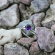 Amethyst topaz twist twig ring, sterling silver twig engagement ring, twig promise ring, branch nature engagement ring