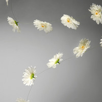 Gerbera Daisy Garland | something special every day