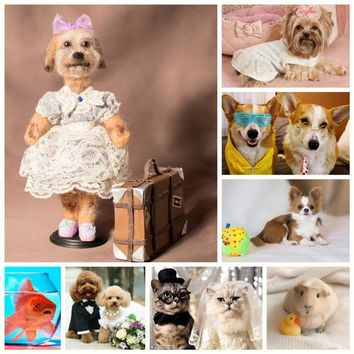 to order animals,Personalized cat,dog, parrot, any animal,pet replica - pets portrait , pet loss