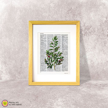 Olive print-olive dictionary print-Kitchen wall art-olive on book page-herbs and spices print-botanical print-kitchen set-NATURA PICTA-DP047