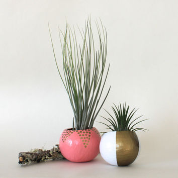 Air Plant Planter Duo with Air Plants  -  Pink, White & Gold