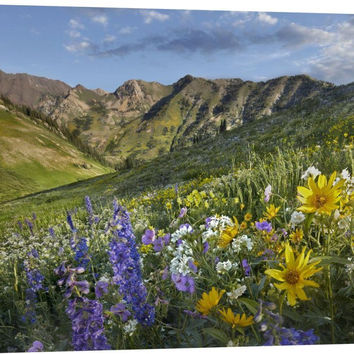 Larkspur and Sunflowers, Albion Basin