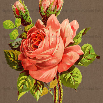 Pink Rose with Buds Vintage Printable | Floral Transfer Image | Flower Art Print | Antique Illustration | Vintage Clipart | Instant Download
