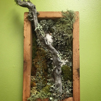 Moss Sculpture Wall Art / FREE SHIPPING