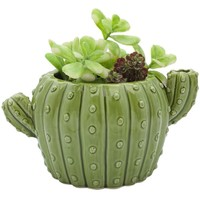 Cactus Flower Pot