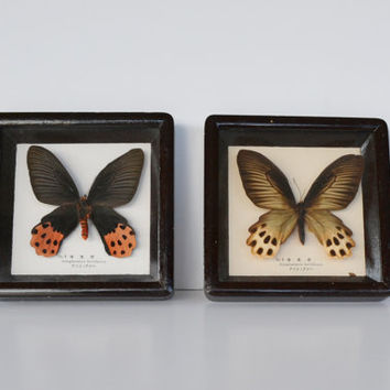 Butterfly Shadow Box Frame Real Butterflies in a by JudysJunktion