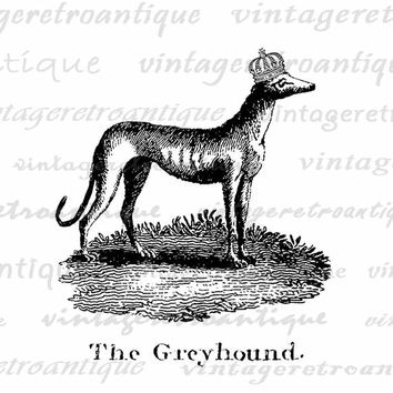 Printable Digital Greyhound with Crown Download Dog Graphic Illustration Image Vintage Clip Art Jpg Png Eps  HQ 300dpi No.1082