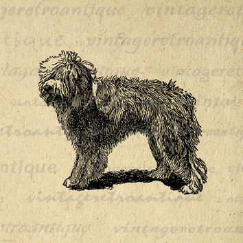 Digital Sheepdog Dog Image Download Illustration Graphic Printable Antique Clip Art for Transfers Printing etc HQ 300dpi No.3098