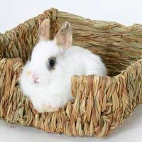 Peters Rabbit Woven Grass Pet Bed