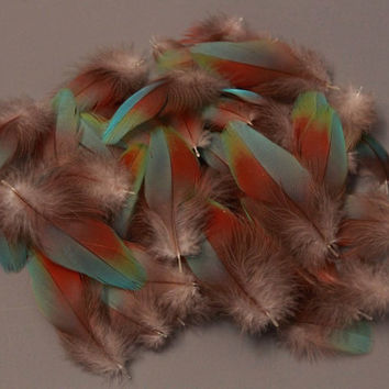 Rare! Rainbow Macaw Body Feathers 10 pcs + 8 Red from Greenwing Parrot Bird Turquoise Blue Green
