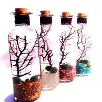 Marimo Zen Garden Terrarium of Elemental Magic Gift Set