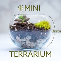 succulent terrarium, mini terrarium, diy terrarium, mother's day gift