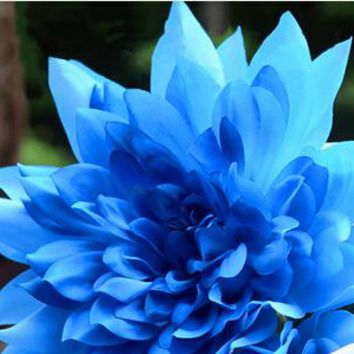 Promotion!10 seeds Blue Dahlia Seeds Beautiful Gardens Dahlia pinnata Bonsai Plant Flower Seeds Perennial
