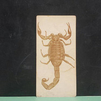 Vintage Scorpion Flash Card Insect Color Illustration Paper Ephemera Art Decor Nature Bugs Collage Crafts Supply