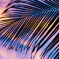 SUNSET PALM Art Print by catspaws