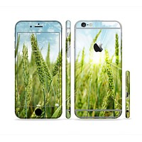 The Sunny Wheat Field Sectioned Skin Series for the Apple iPhone 6 Plus