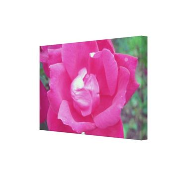 Vivid Hot Pink Rose Photo Stretched Canvas Art
