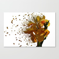 Iris Explosion Canvas Print by Claude Gariepy