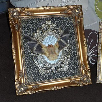 Mummified bat with open wings mounted on vintage frame