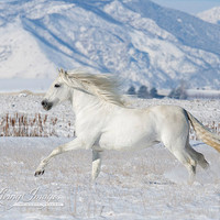 Andalusian In the Snow - Fine Art Horse Photograph
