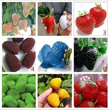 Vegetables and fruit seeds Strawberry seeds 1800 pieces seeds of each color seeds grain Bonsai plants Seeds for home & garden
