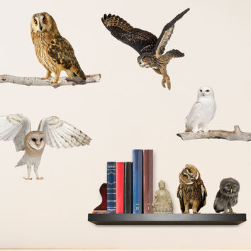 Owls Say Hoot Wall Decals