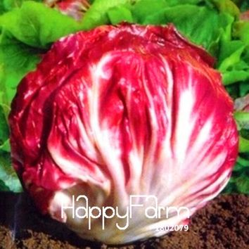 Hot Sale!100 Pieces/Bag Red cabbage chicory seeds selling health vegetable, free shipping,#7YN2B5
