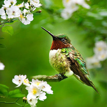 Hummingbird With Flowers, 8x10 Hummingbird Photography, Bird Art, Wall Art, Photo Print