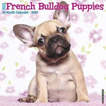 Just French Bulldog Puppies  Wall Calendar, French Bulldog by Willow Creek Press