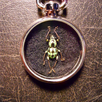 Light Glitter Green Beetle Specimen Pocket Watch Ossuary Metallic Bug