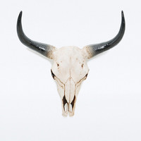Bison Skull Wall Object - Urban Outfitters