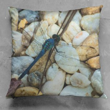 Dragonfly on Rocks
