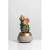 """9"""" Cacti Collection"""