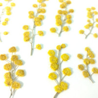 Dried Pressed Flowers, Mini Fairy Garden, Mustard Yellow for Natural Confetti, Scrapbook, Invitation, Card Embellishment or Party Decor