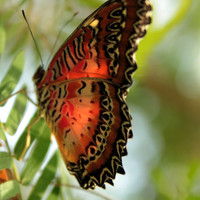 nature photography butterfly wall decor nature art wildlife art butterfly print art photography nature decor 4x6 5x7 6x8 8x10 10x15