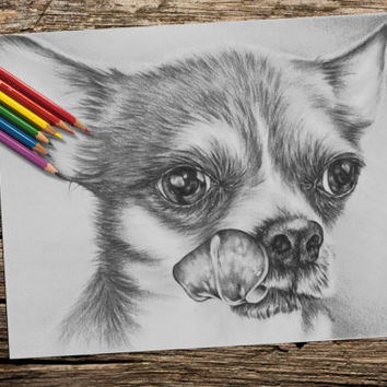Chihuahua coloring book pages, adult coloring book, coloring pages, adult coloring pages, coloring book for adults, printable coloring page