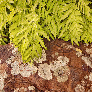 Fern And Rock - Nature Photography
