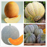 20pcs/bag Cantaloupe seeds ,Different kinds Honey melon Organic fruit seeds Extra-big Extra-sweet perennial HaMi melon plant pot