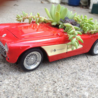 Succulents in 1957 Corvette Toy Car