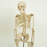 Vintage Human Skeleton Anatomy Model / Science Medical Oddity Decor