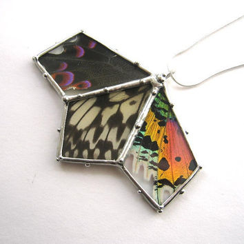 Specimen Necklace - Real Butterfly Fan