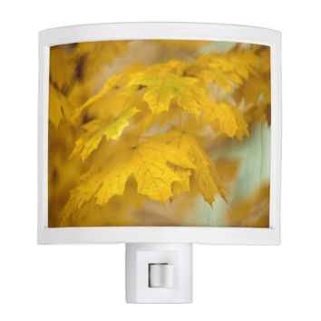 Yellow autumn maple leaves. night light