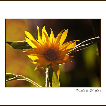 Sunflower Photograph Autumn,Floral,Fall,Orange,yellow,vibrant colors,sunset,eggplant,glowing,sunflower lovers decor,bright,sunny,sun flower,