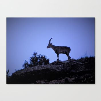The mountain goat (Lo Salvatge) Canvas Print by  it´s Ephemeral